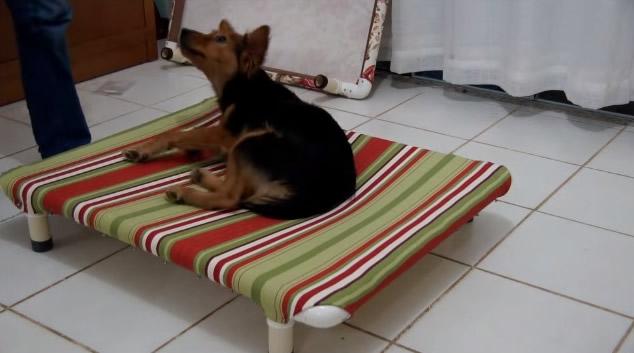 Como fazer caminha para cachorro passo a passo